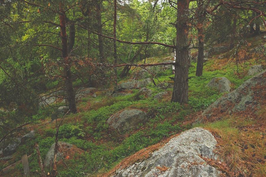 schweden wälder