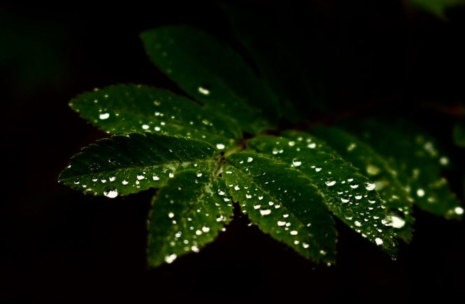 Schwedens Wälder im Regen | Fotografie