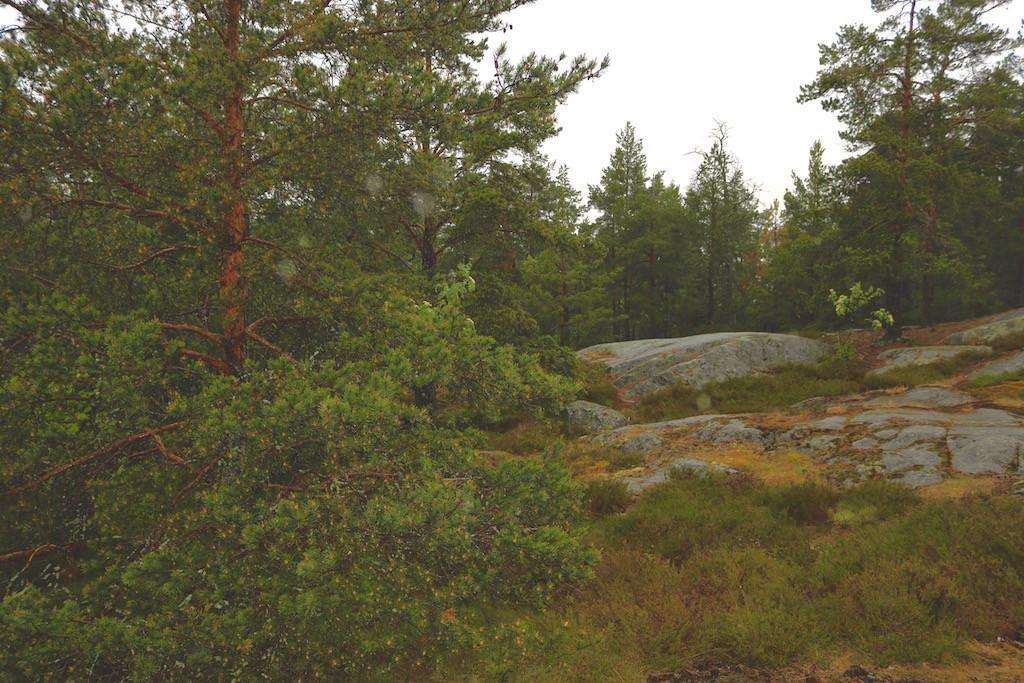 schwedens wälder